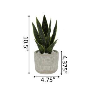 Flora Bunda 12 in. Snake Plant in 4.75 in. Arrow Cement Planter